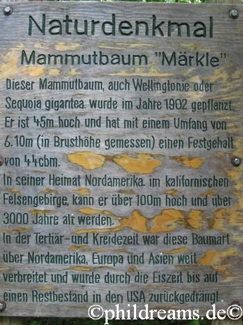 Hinweistafel Mammutbaum