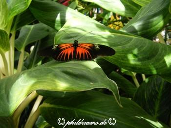 schmetterling_1